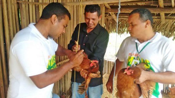 Ações do Sistema SAF estão mudando a vida dos agricultores familiares dos municípios do 'Mais IDH'.